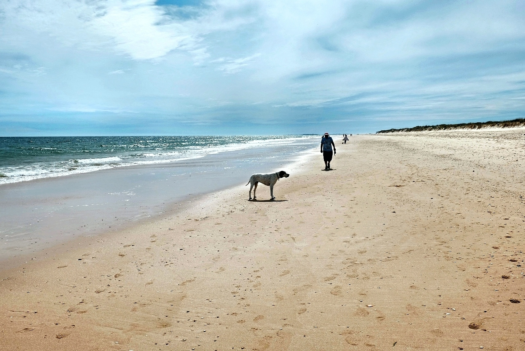 Photo in Sea and Sand #europe #portugal #algarve #faro #tavira #manta rota #beach #shore #coast #atlantic ocean #dog #man #back light #sand #dunes