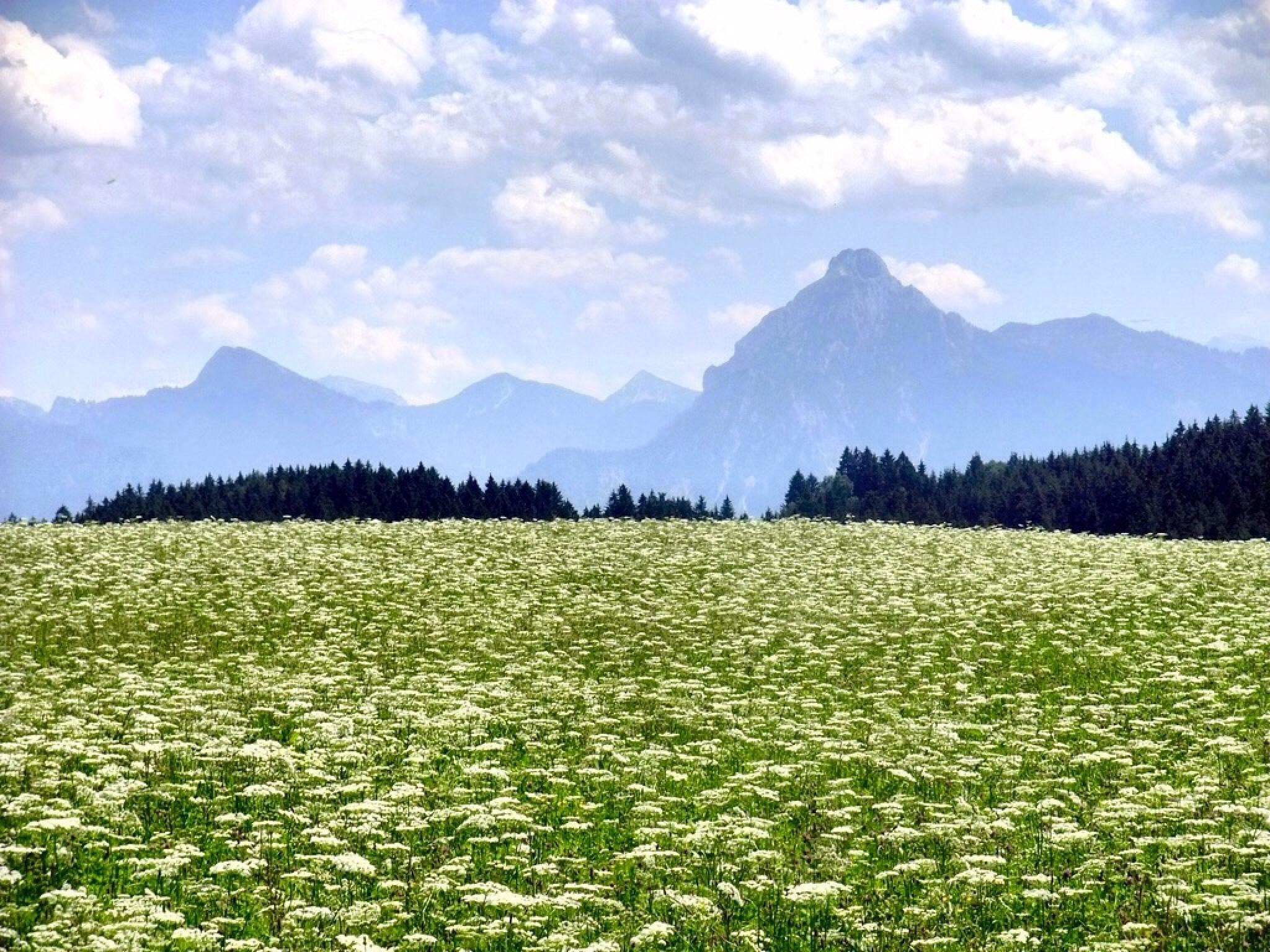 Alp by Detlef F. Rimkus