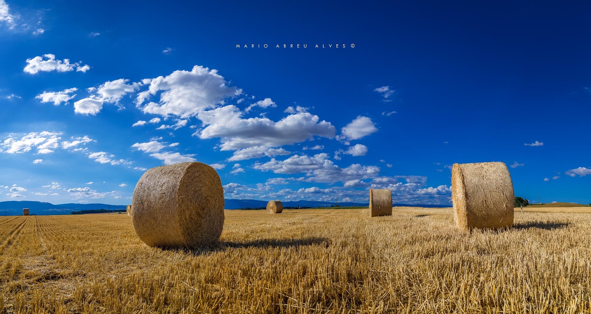 rolls of straw by abreualvesmario
