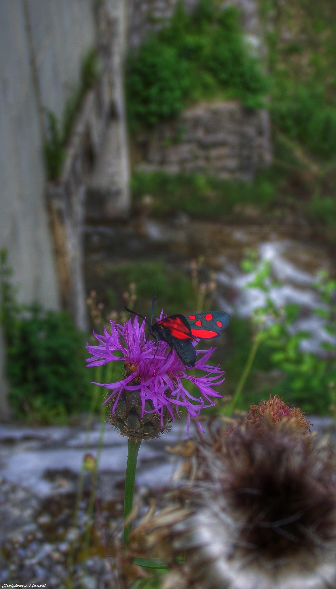 Haute-Savoie....... by christophe.maurel15