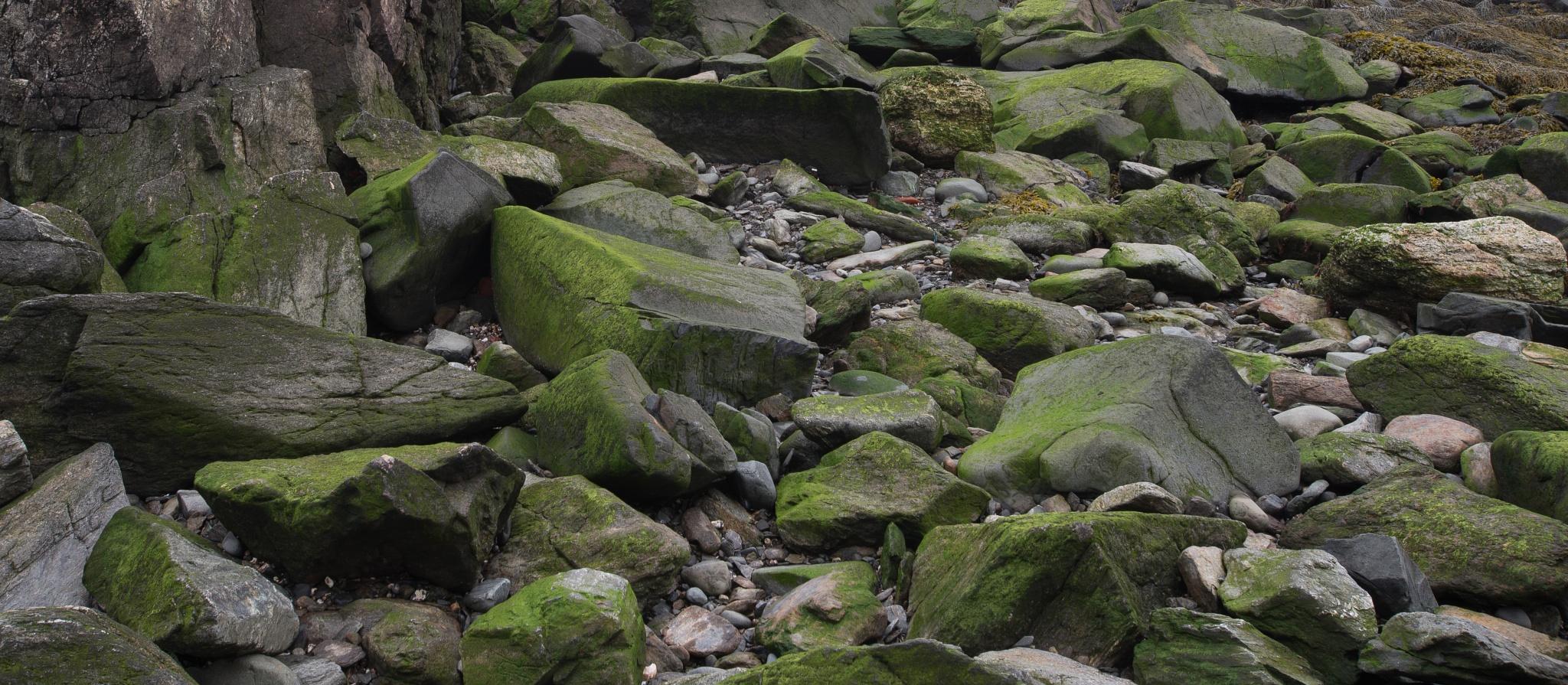 ...seacoast greens... by jamesmerecki