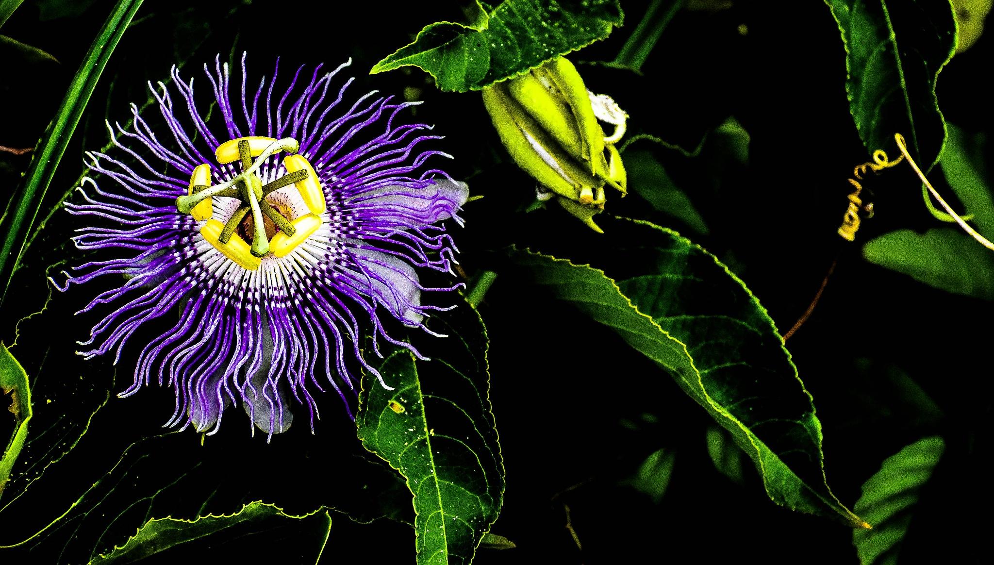 flower by PrentissFindlay