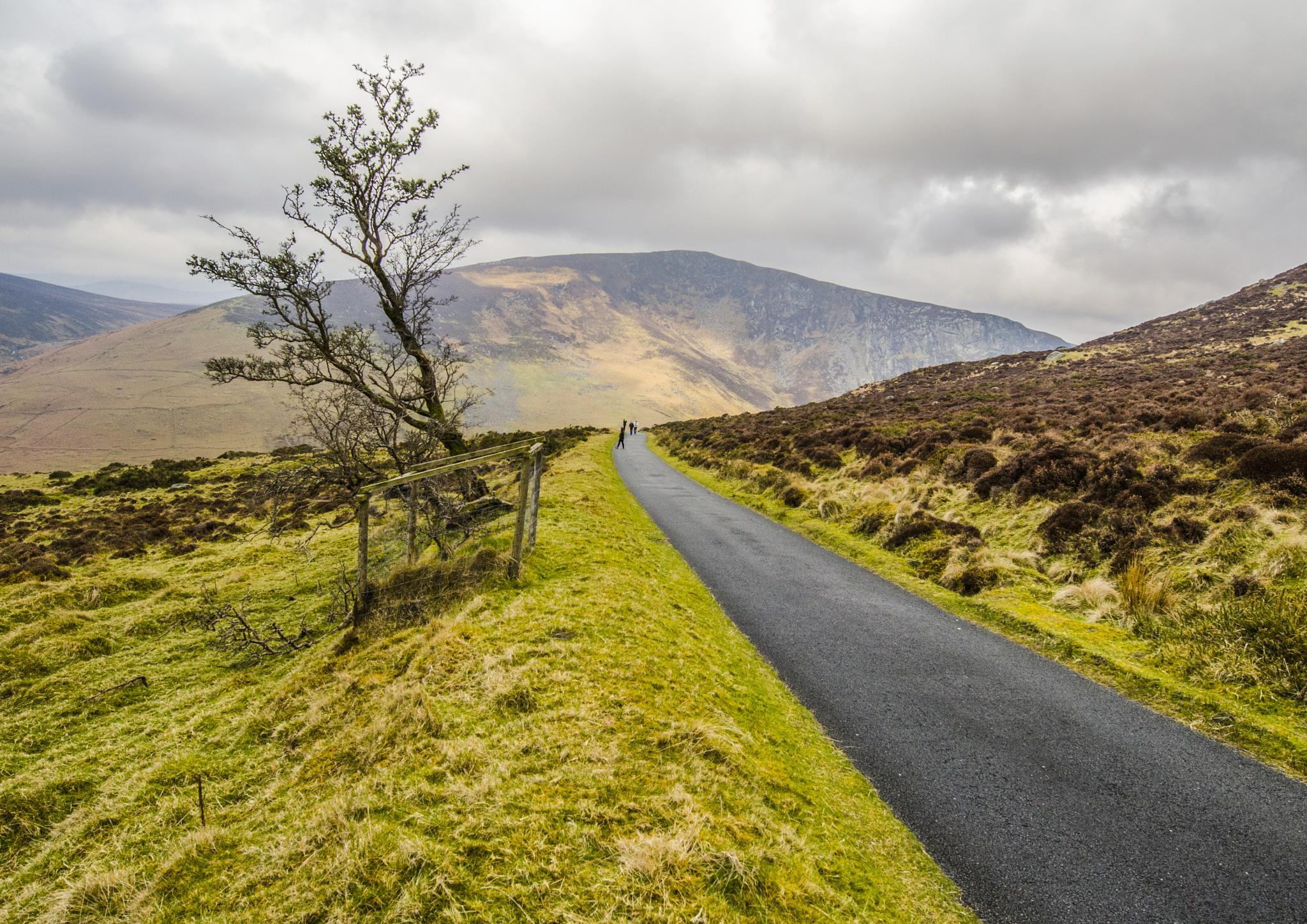 Wind Blown Tree, Wicklow Mountains, Ireland by Pat kehoe