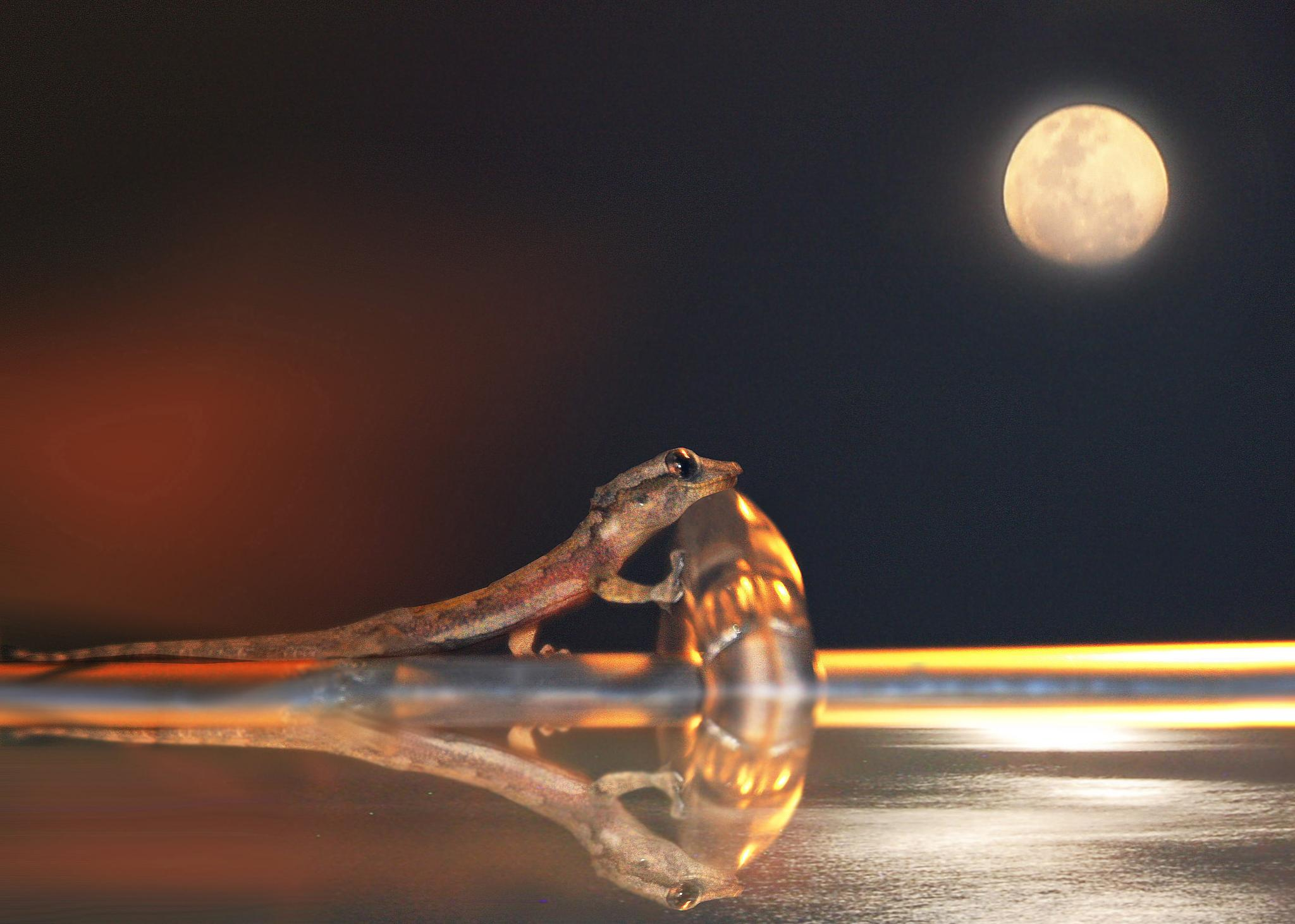 al chiaro di luna (under the fullmoon) by Giuseppe Castro