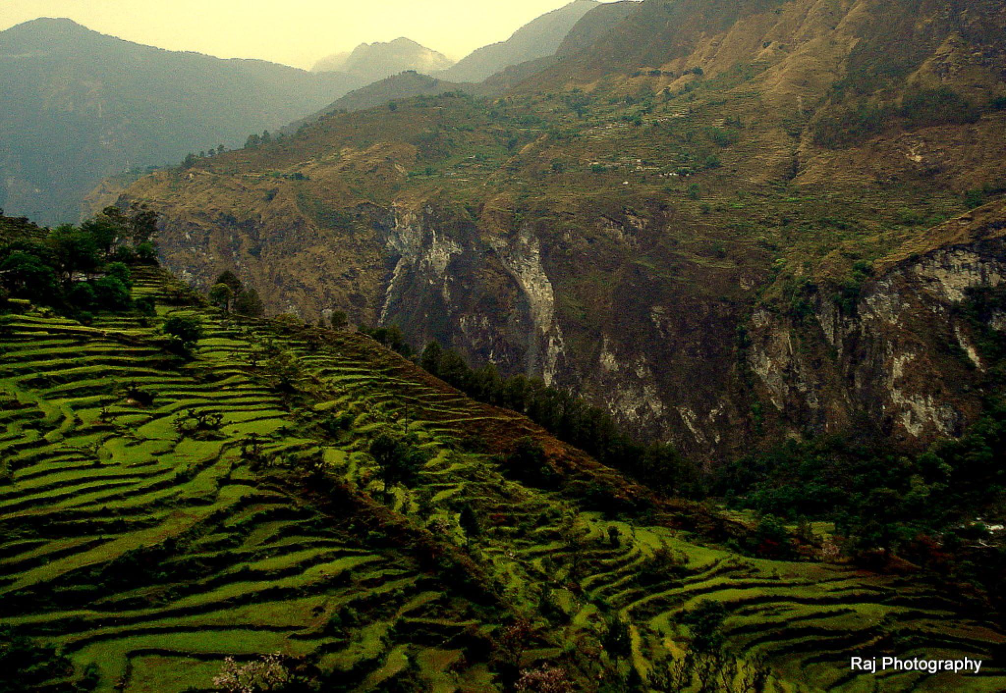 Valley Of Flowers, Himalayan Range- Uttaranchal, India by Third Eye