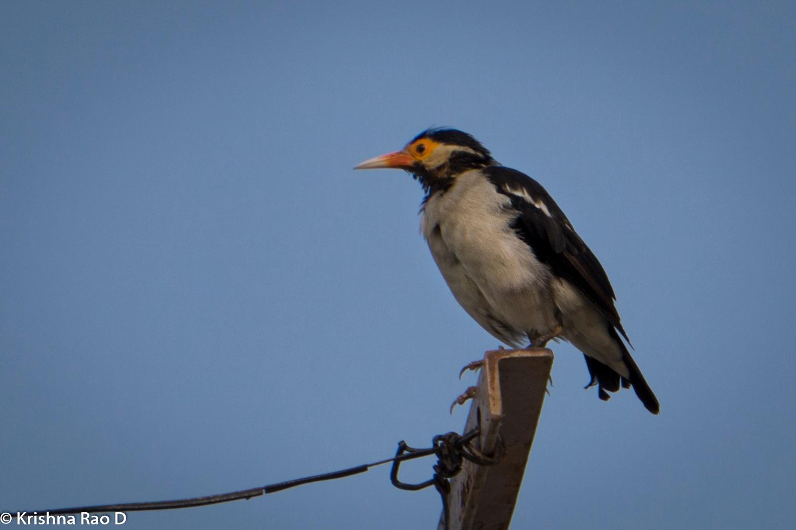 bird by Krishna Rao D