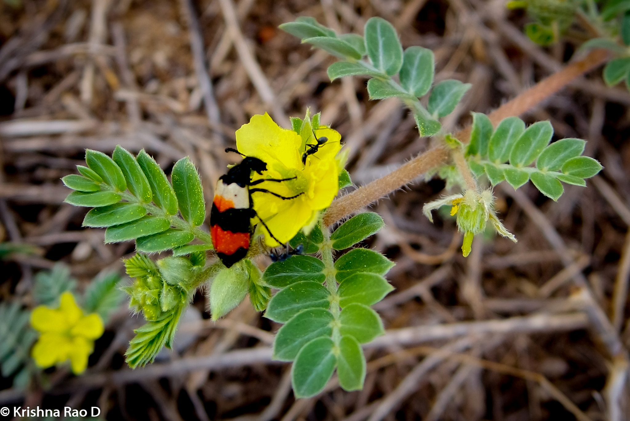 beautiful insects by Krishna Rao D