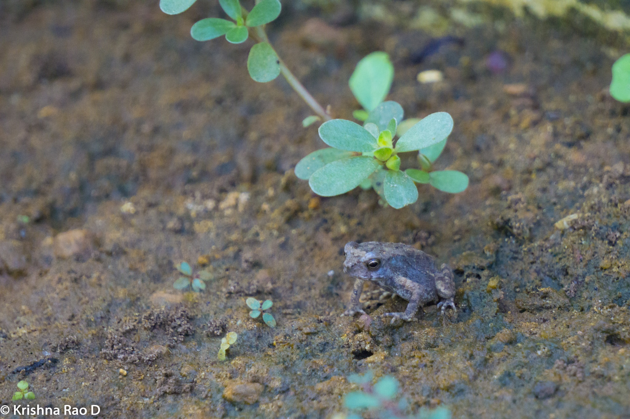 Photo in Animal #frog #nature