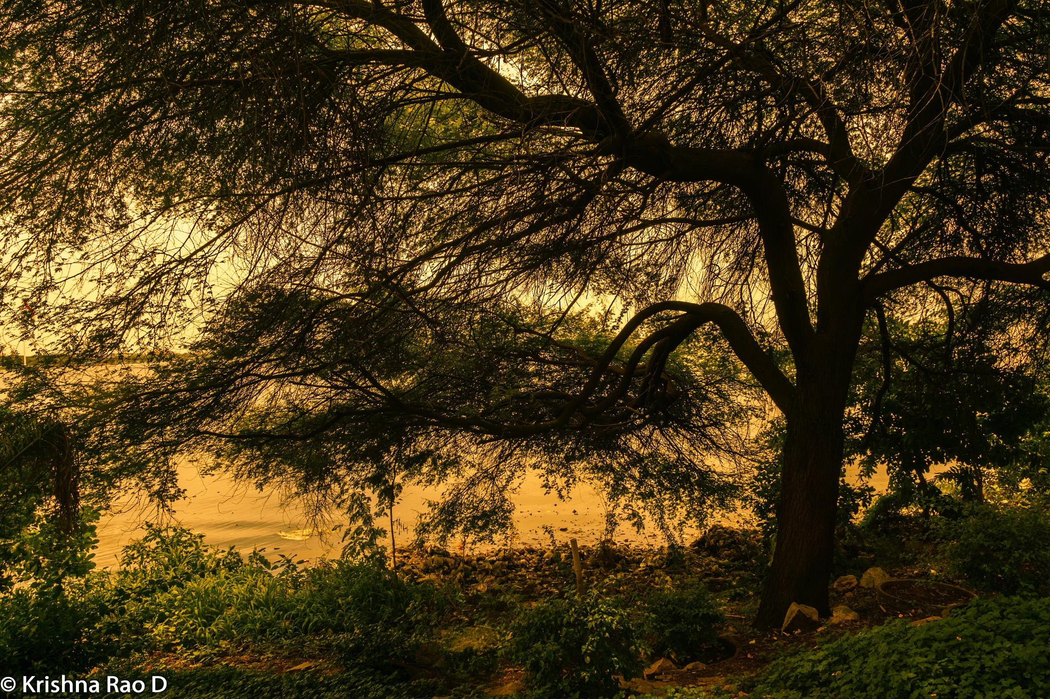 sunrise by Krishna Rao D
