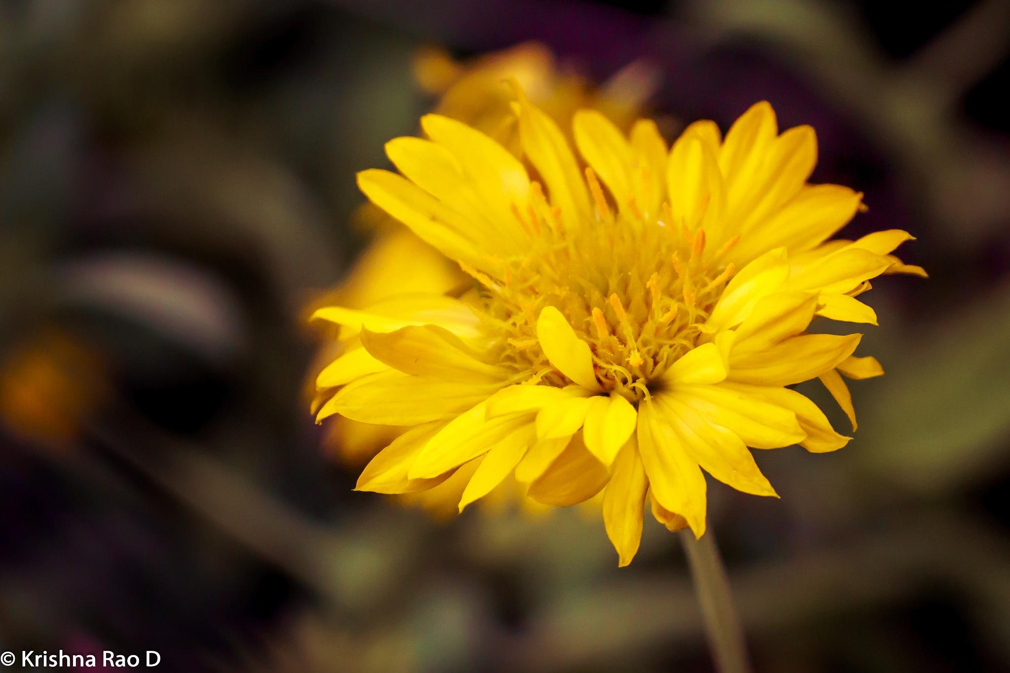 flora by Krishna Rao D
