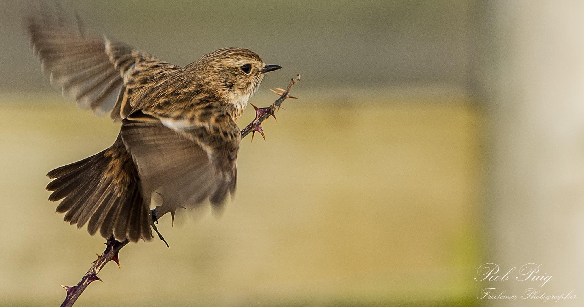 Take off by Robert Puig