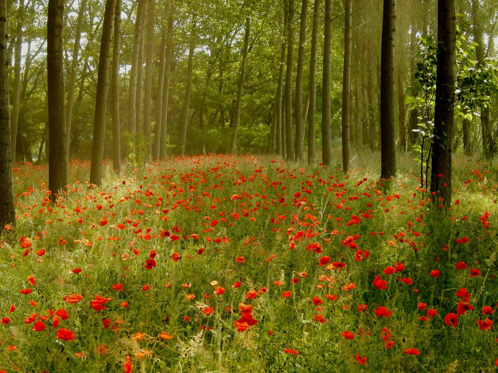 Enchanted Wood  by robertamastretta