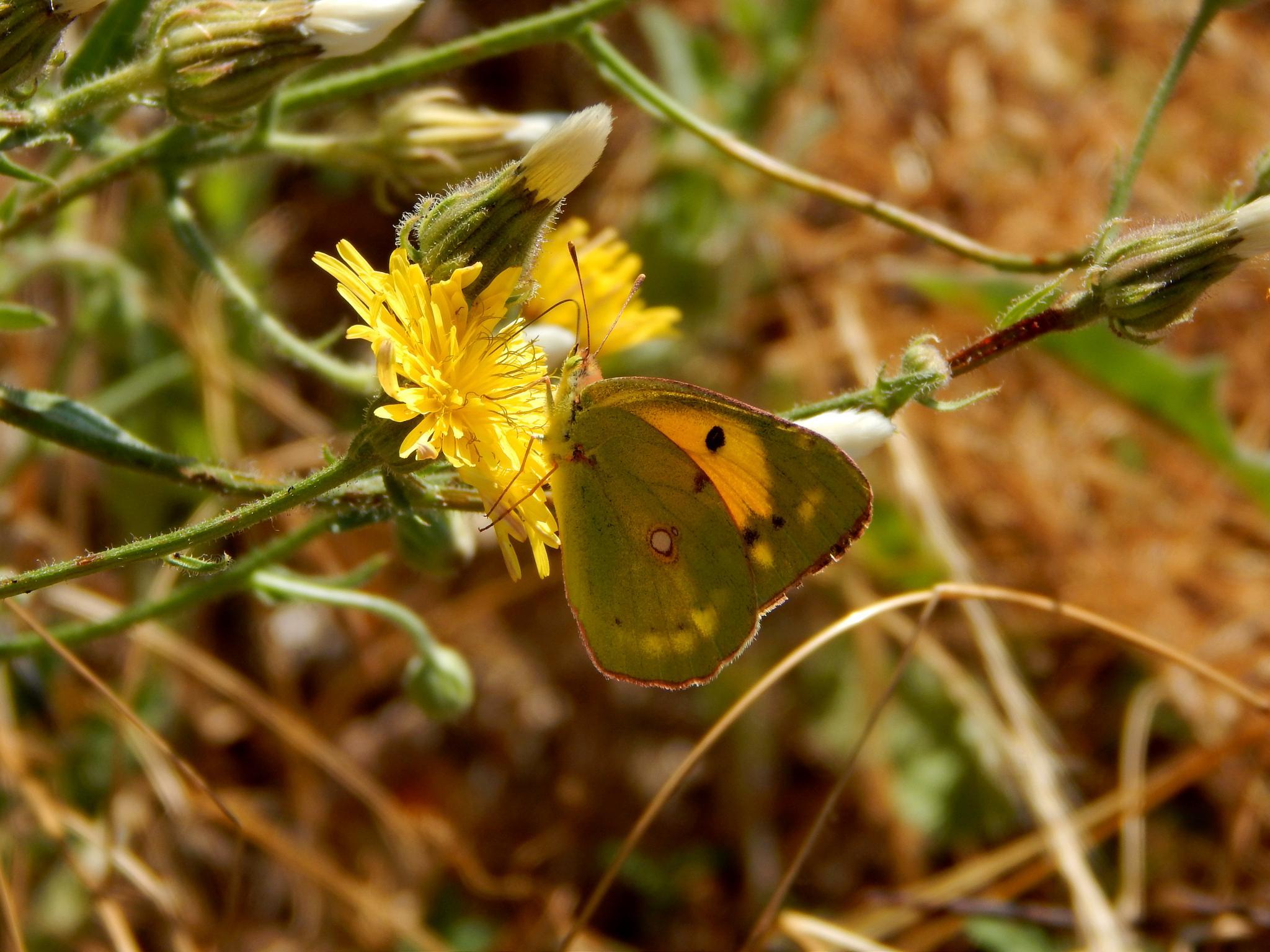 Butterfly  by robertamastretta