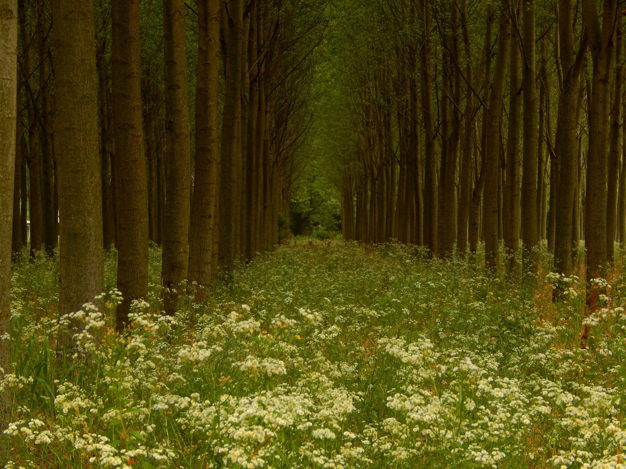 ... Wood   by robertamastretta