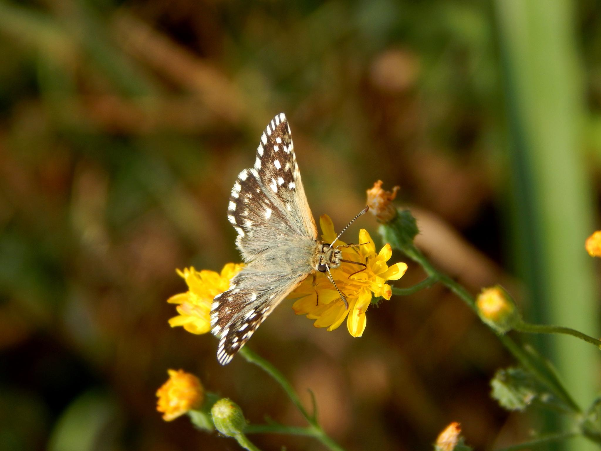 Little butterfly ... by robertamastretta