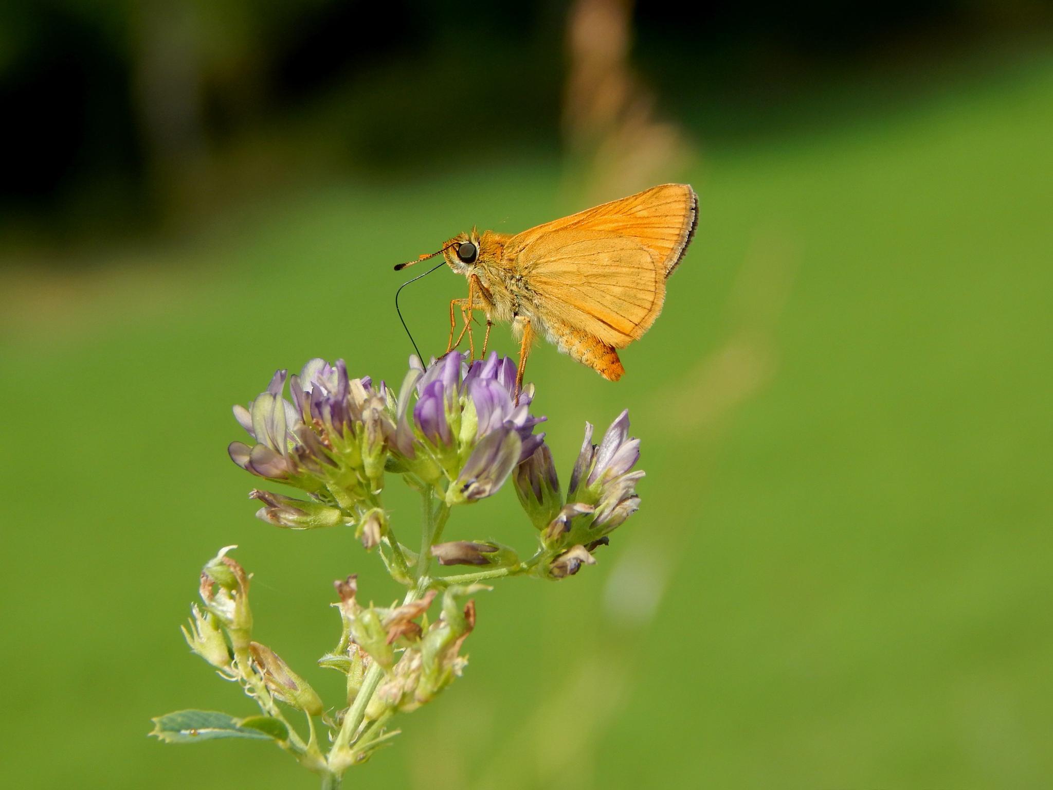 naughty butterfly :-)  by robertamastretta