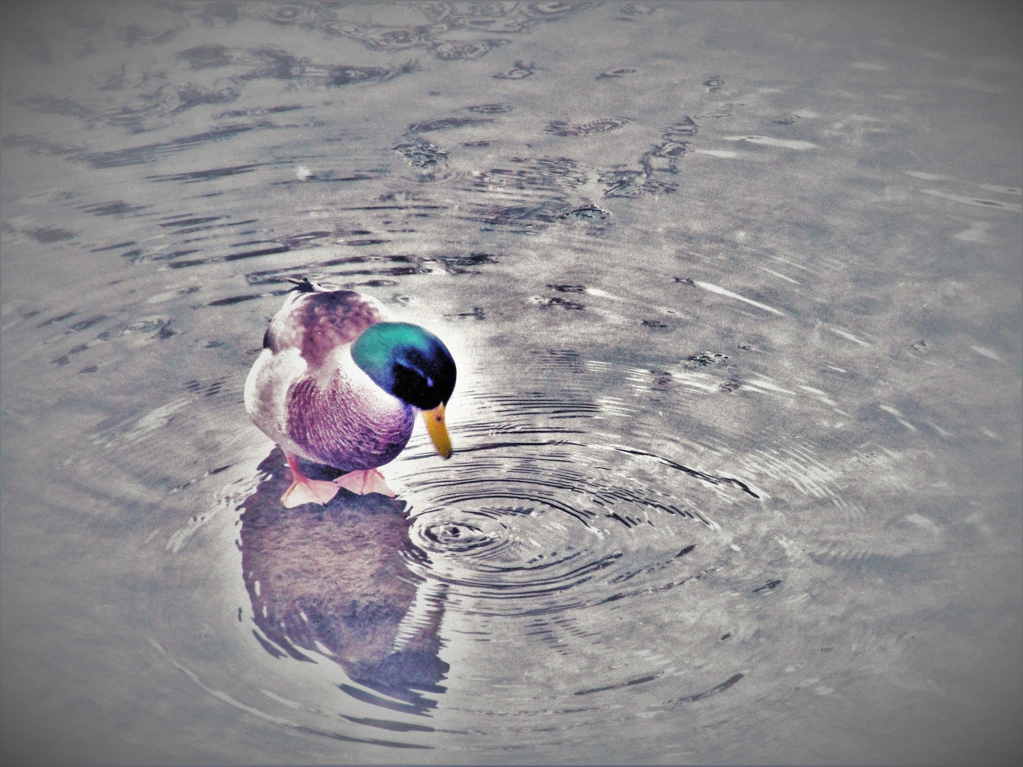 des ronds dans l'eau...... by catherinevigili