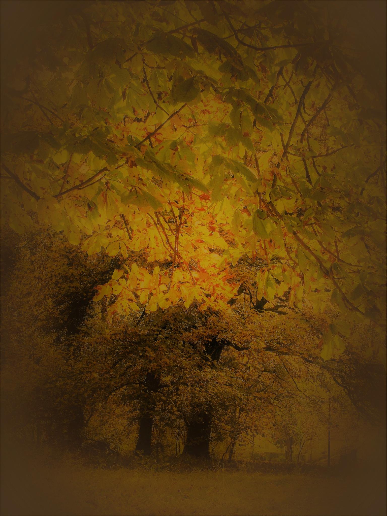 mirage by catherinevigili
