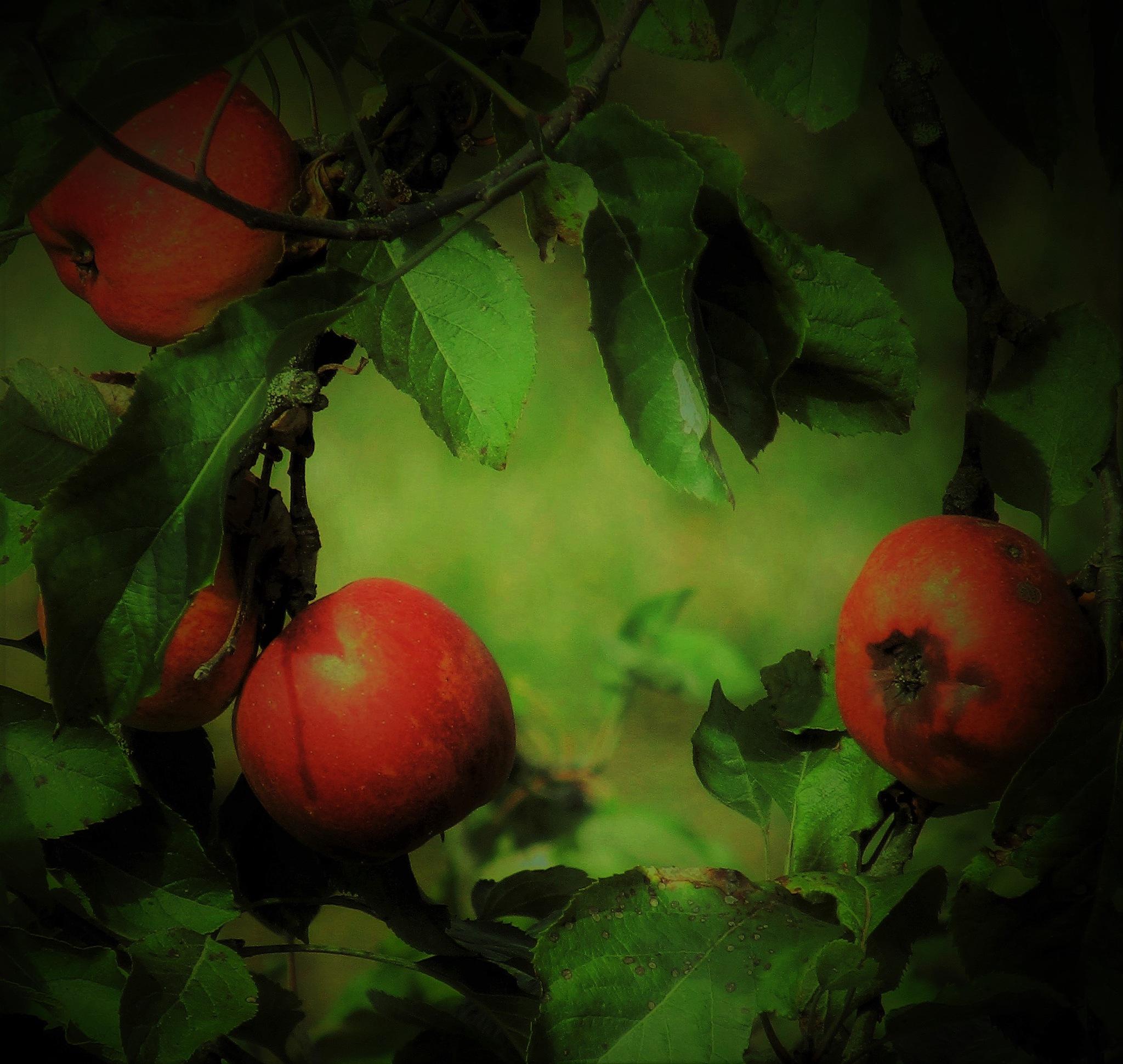 pommes by catherinevigili
