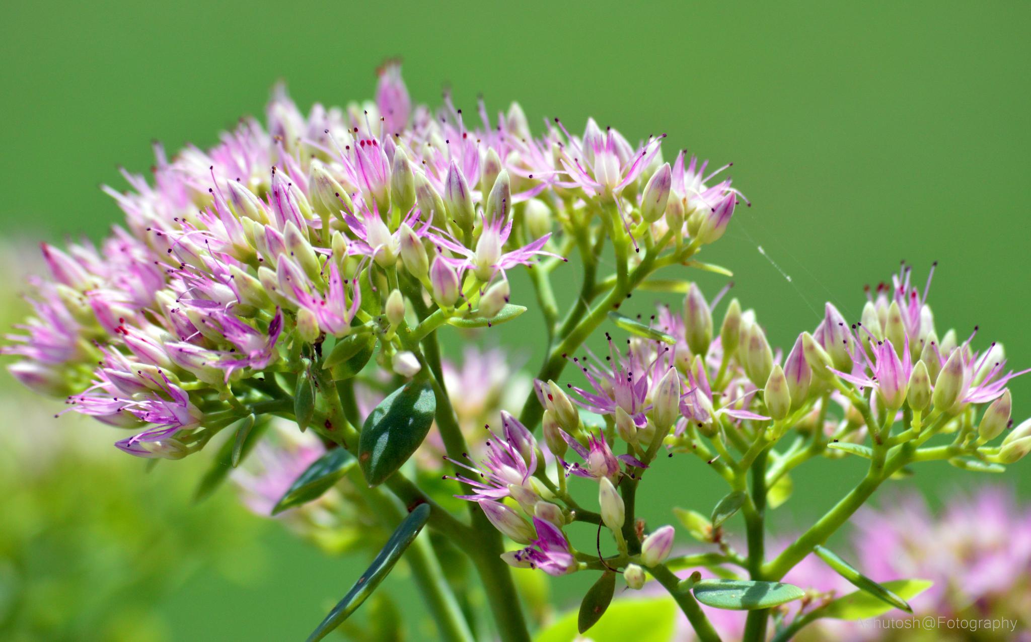 .........bouquet 4 YOU :):):):):)  by ashutosh_2011