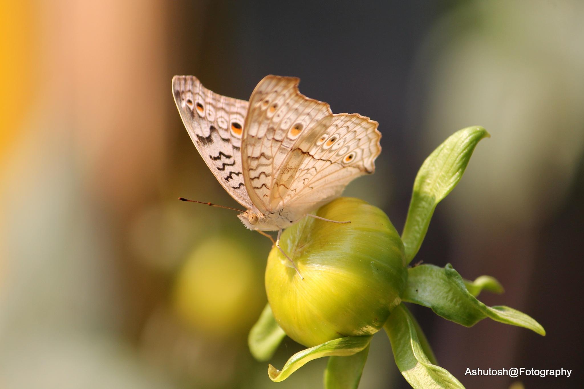 ....beauty & BUDDING BEAUTY 2gether :)) :)) by ashutosh_2011