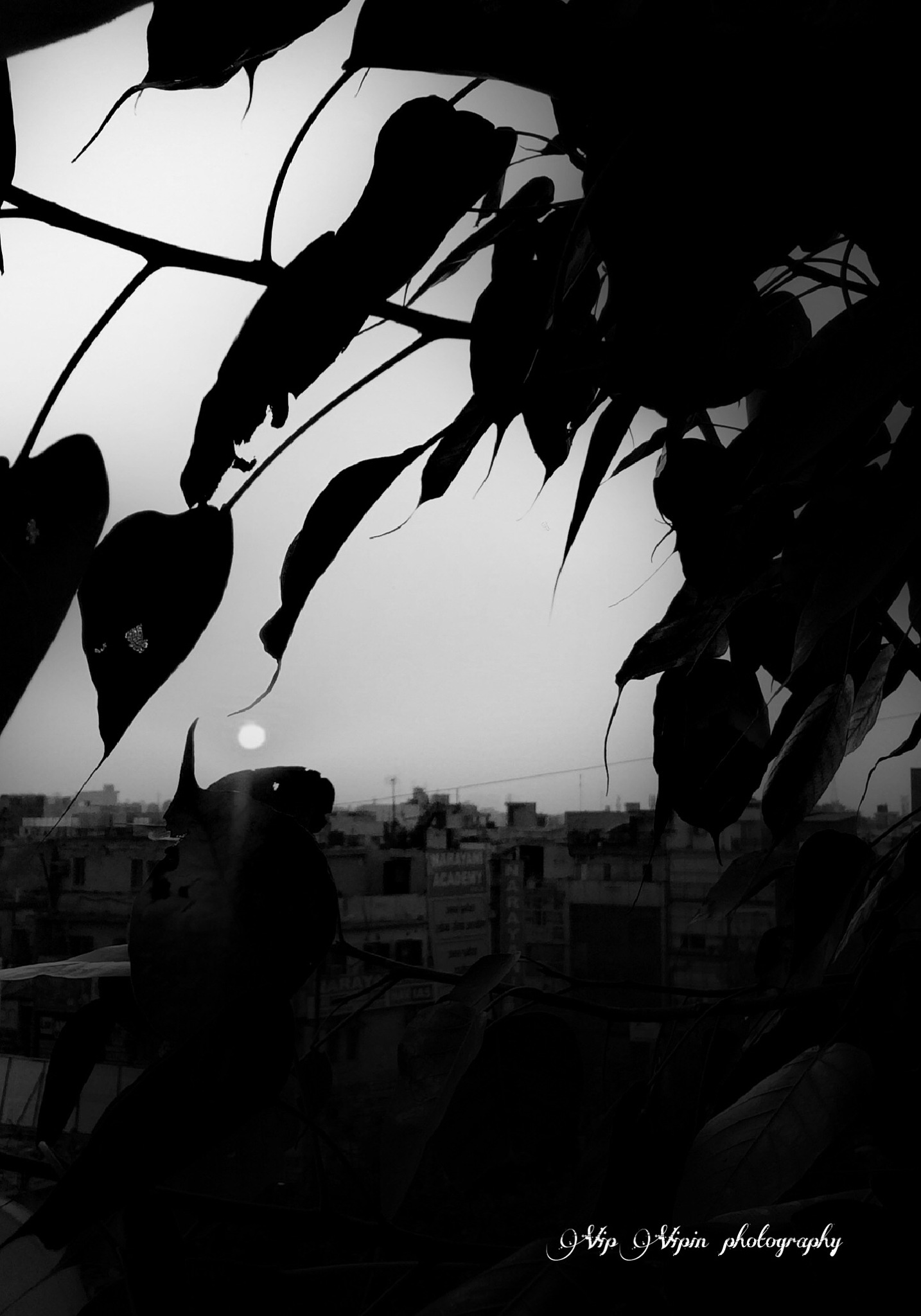 Untitled by vip vipin