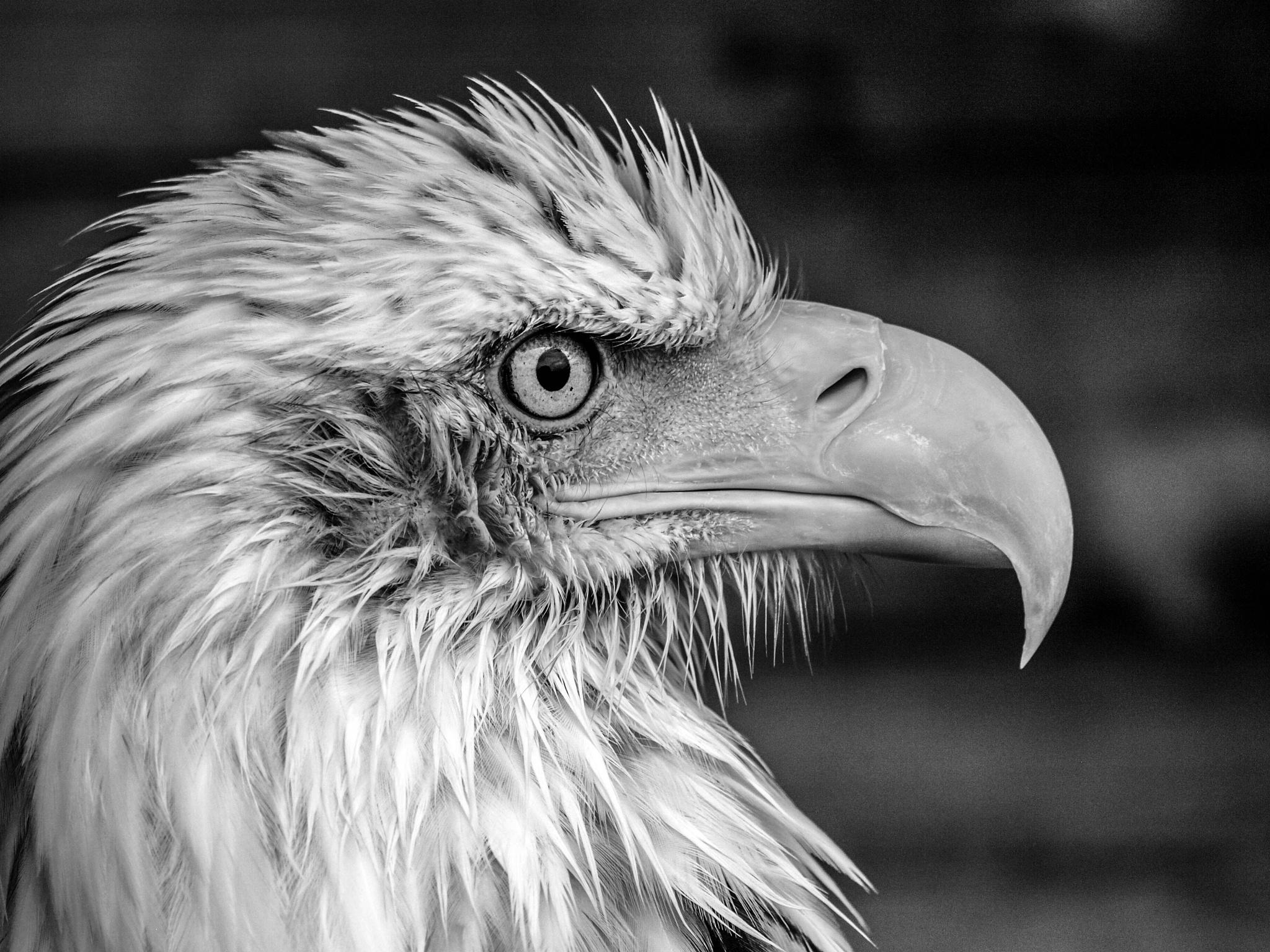 The beak by garry-chisholm1