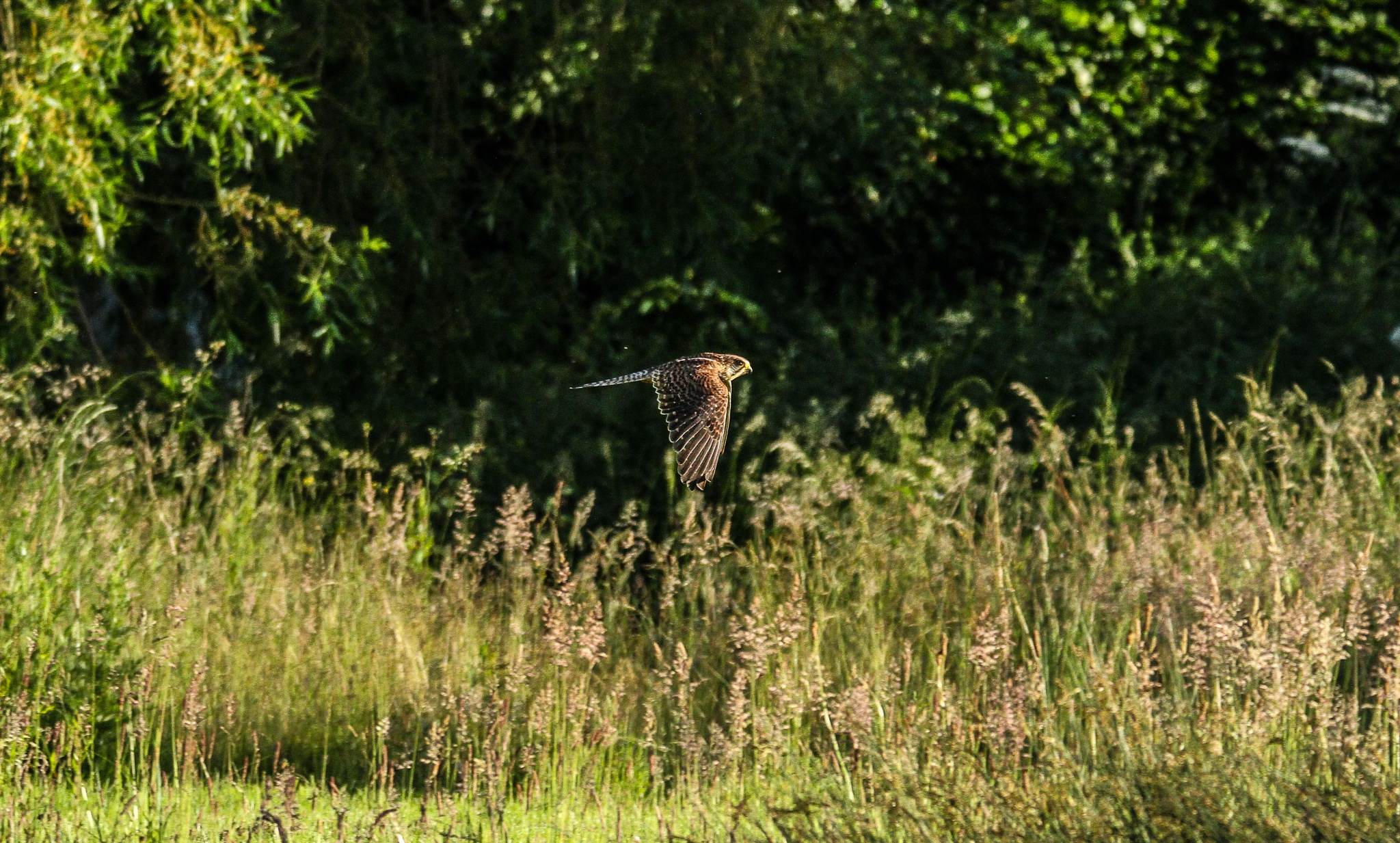Still in search of Ospreys I saw this fellah by garry-chisholm1