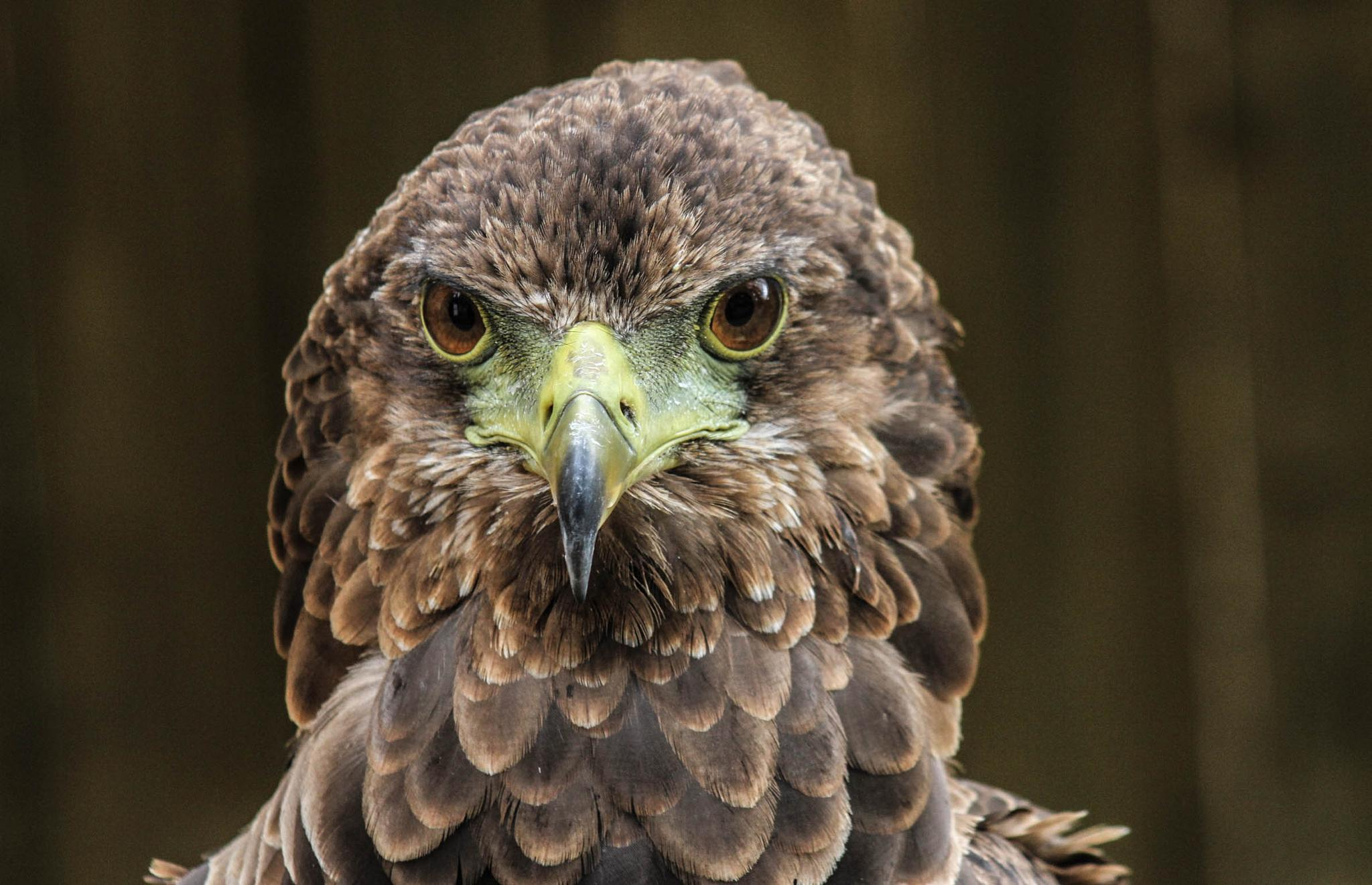 Photo in Animal #eagle #bird #prey #nature #wildlife #raptor