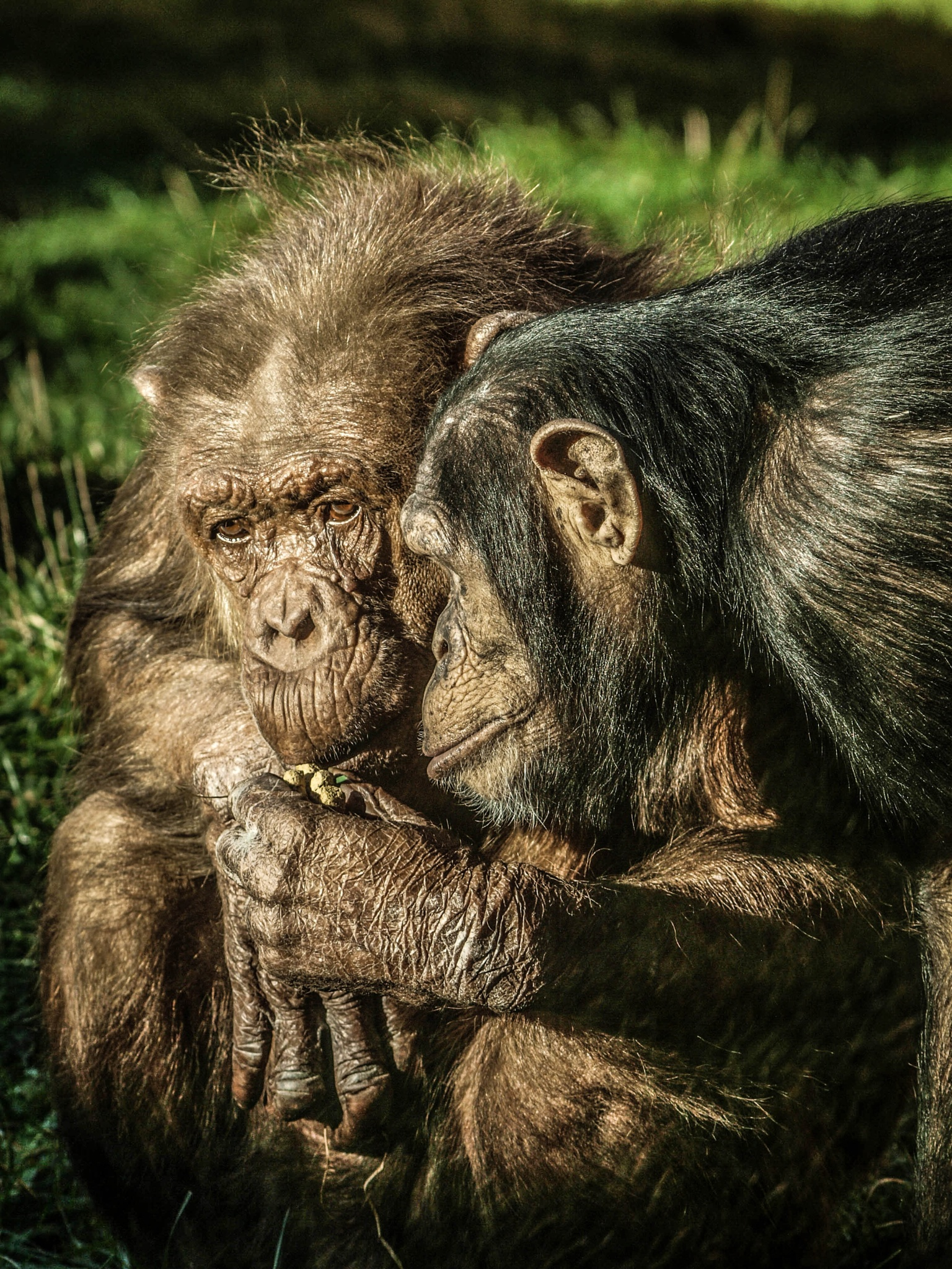 Teach me oh wise one... by garry-chisholm1