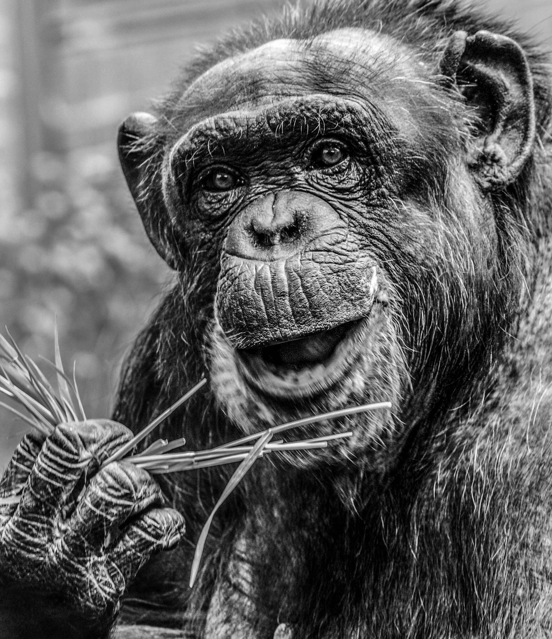 Happy chimp by garry-chisholm1