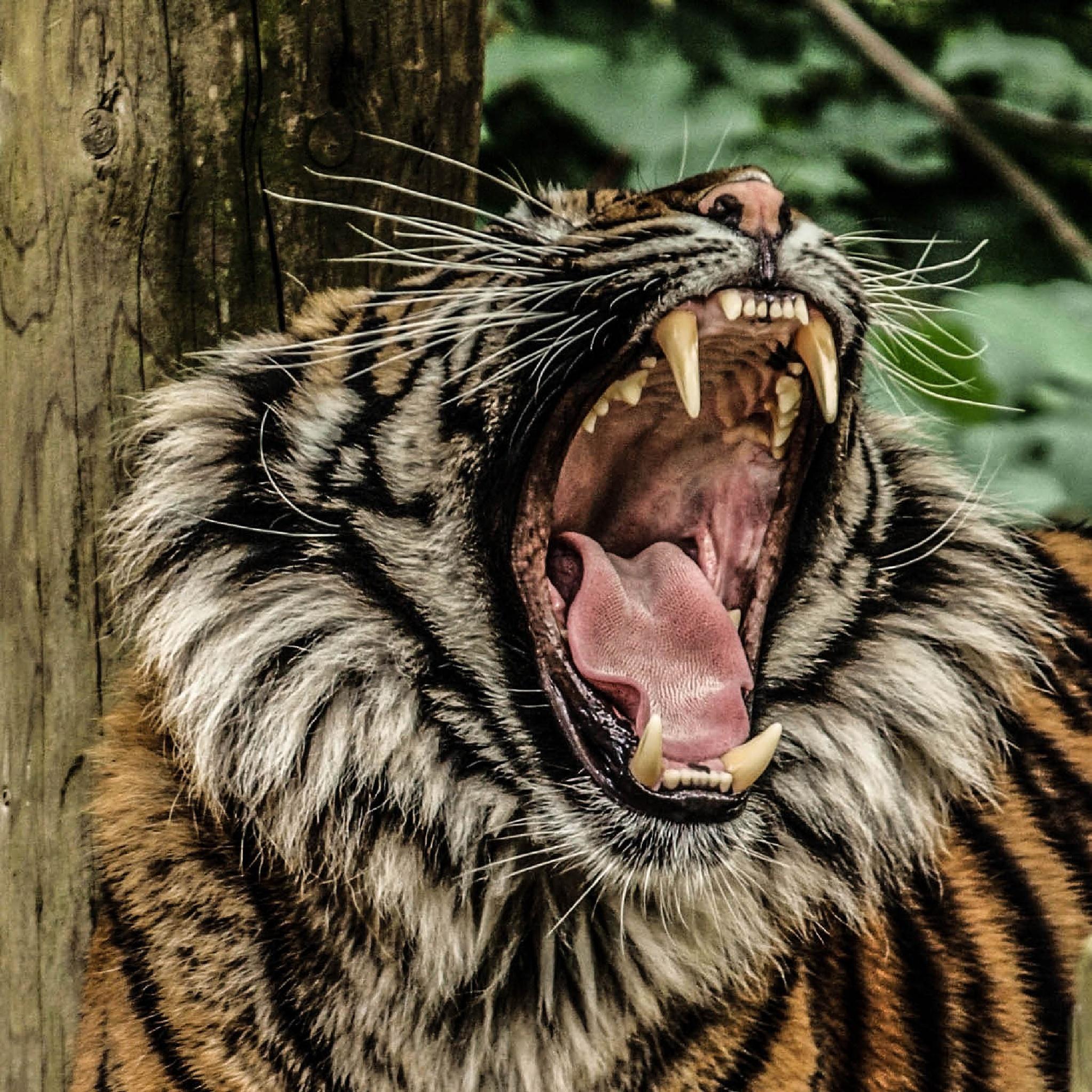 The big yawn by garry-chisholm1