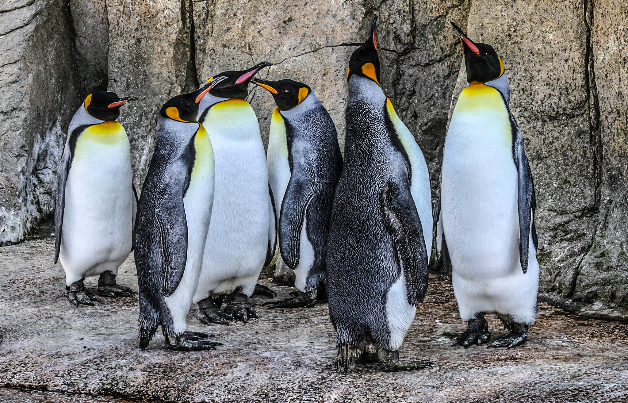 Gathering of the kings by garry-chisholm1