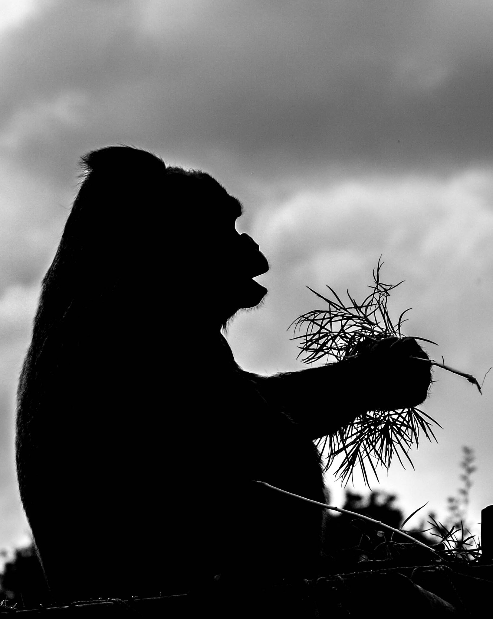 Gorilla silhouette by garry-chisholm1