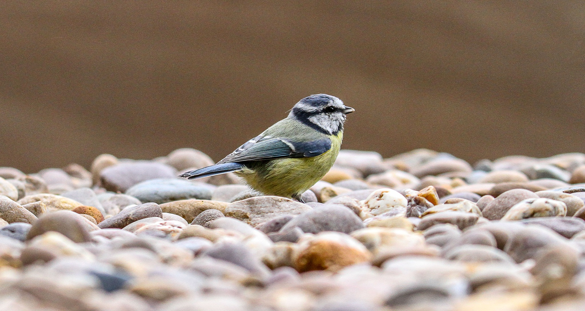 On the rocks by garry-chisholm1
