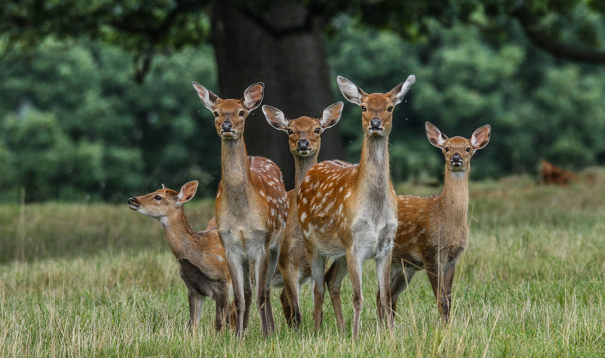 Deer family shot by garry-chisholm1
