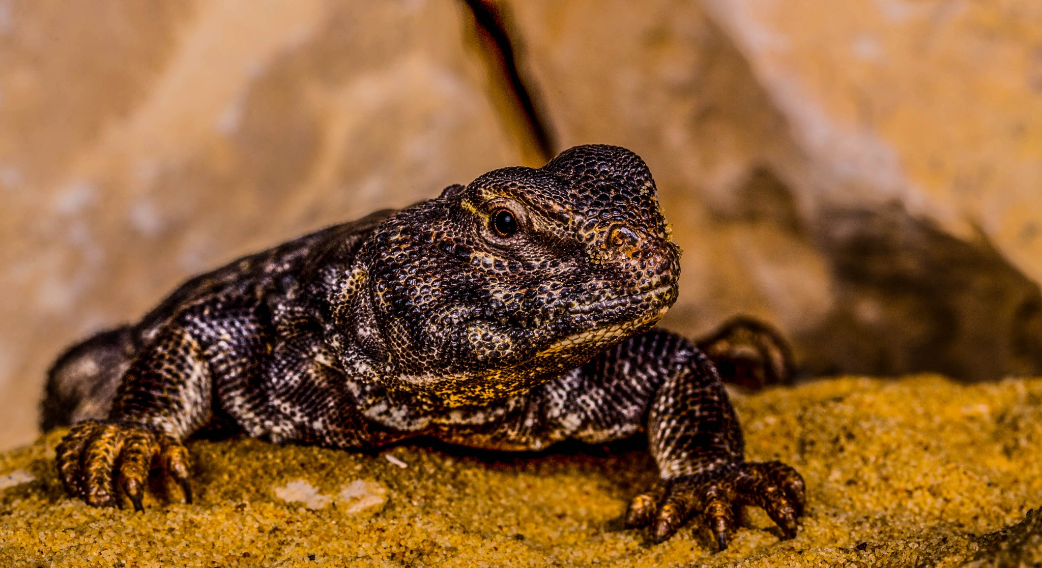 Lizard by garry-chisholm1