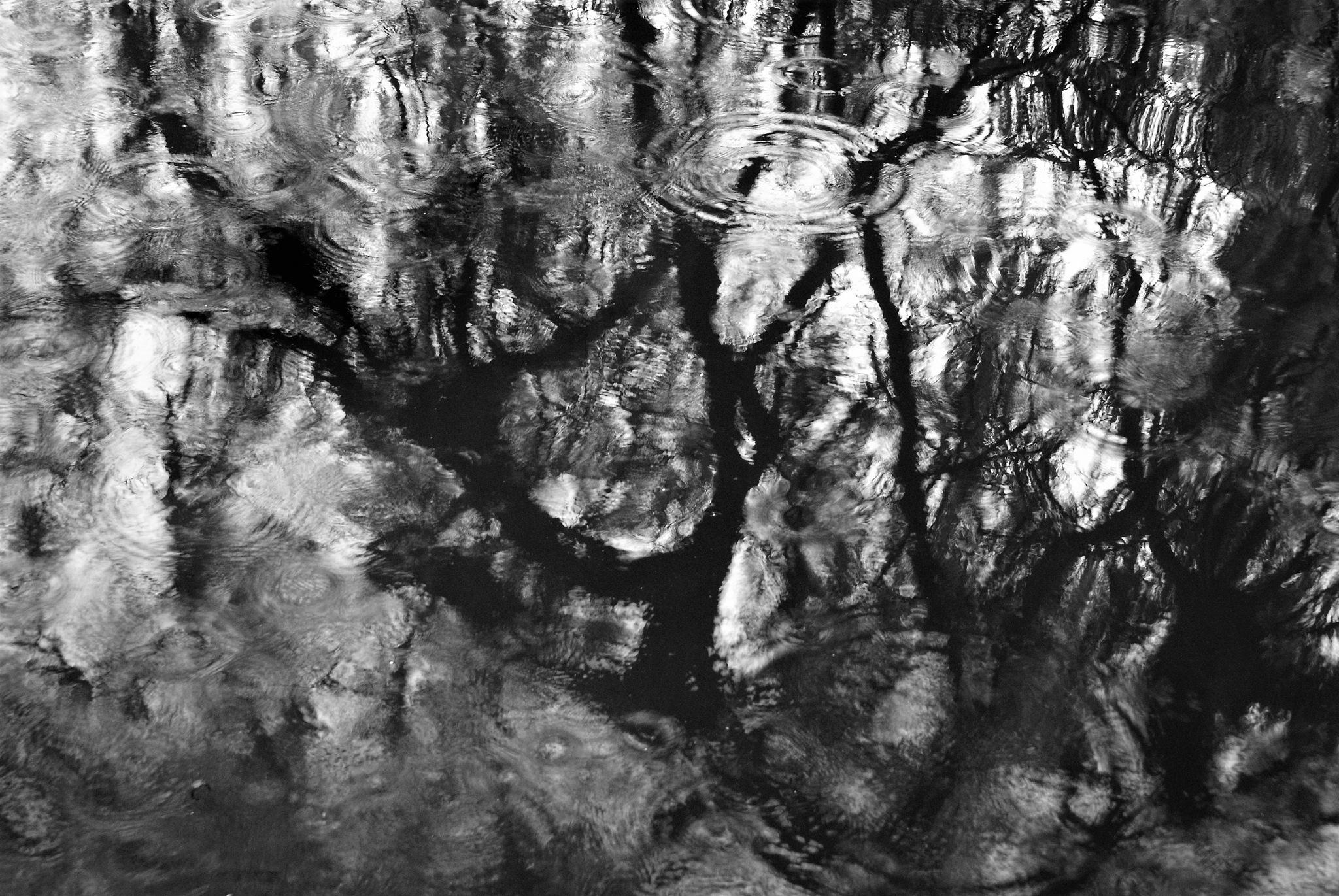 Raindrops And Reflections by DenisJosephDalby