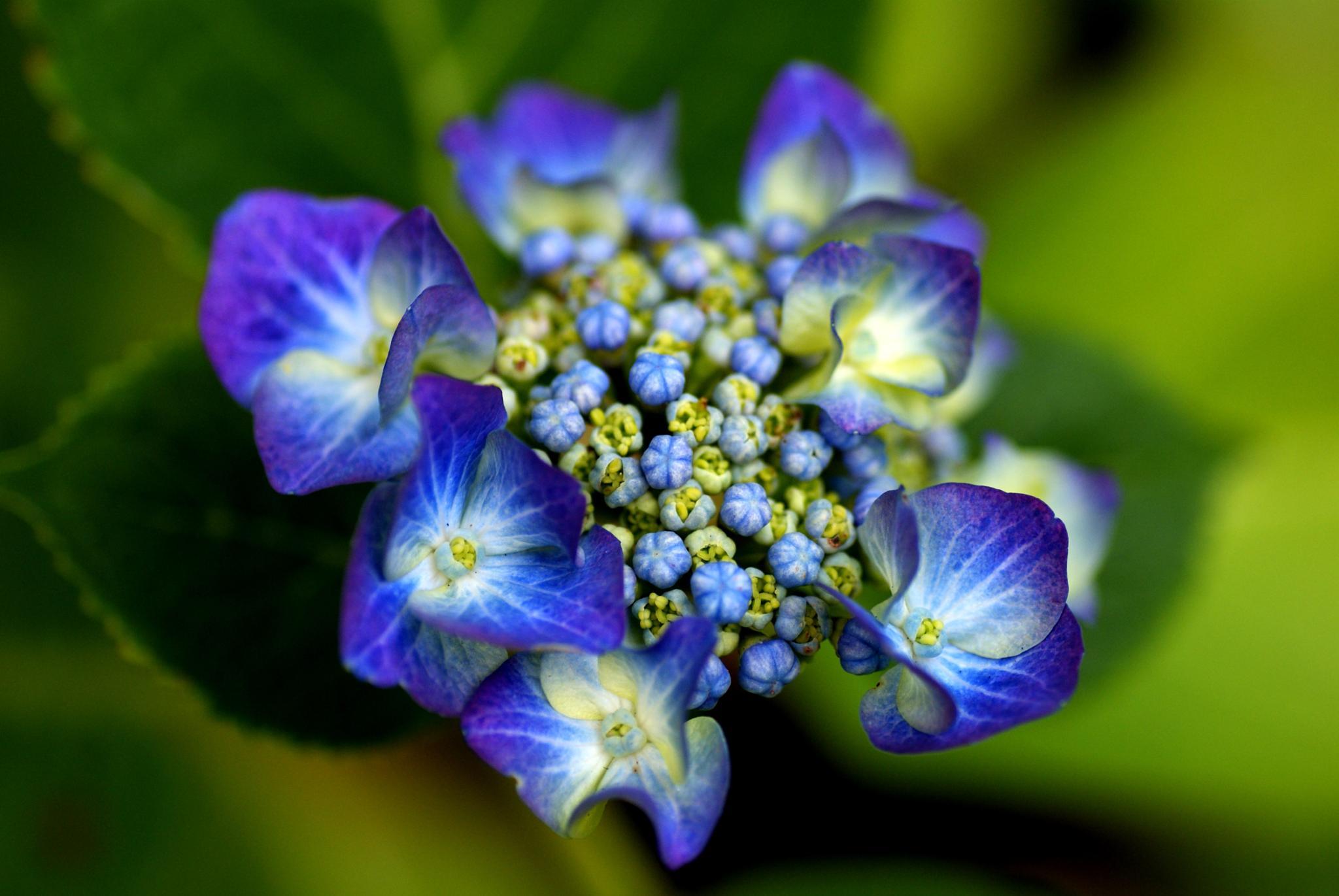 Blue On Green by DenisJosephDalby