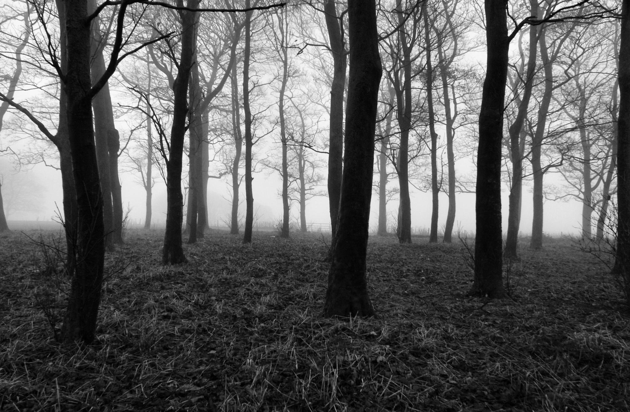 Foggy Trees by DenisJosephDalby