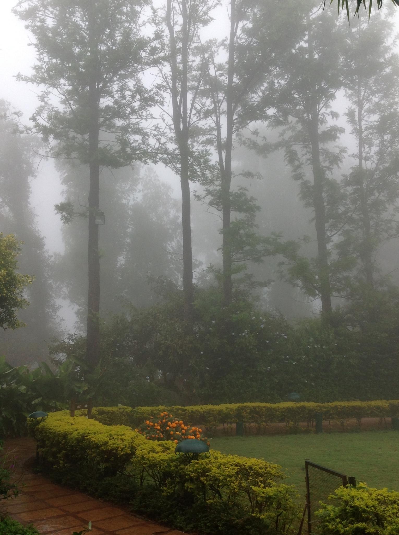 Mist by Sridhar R Setty