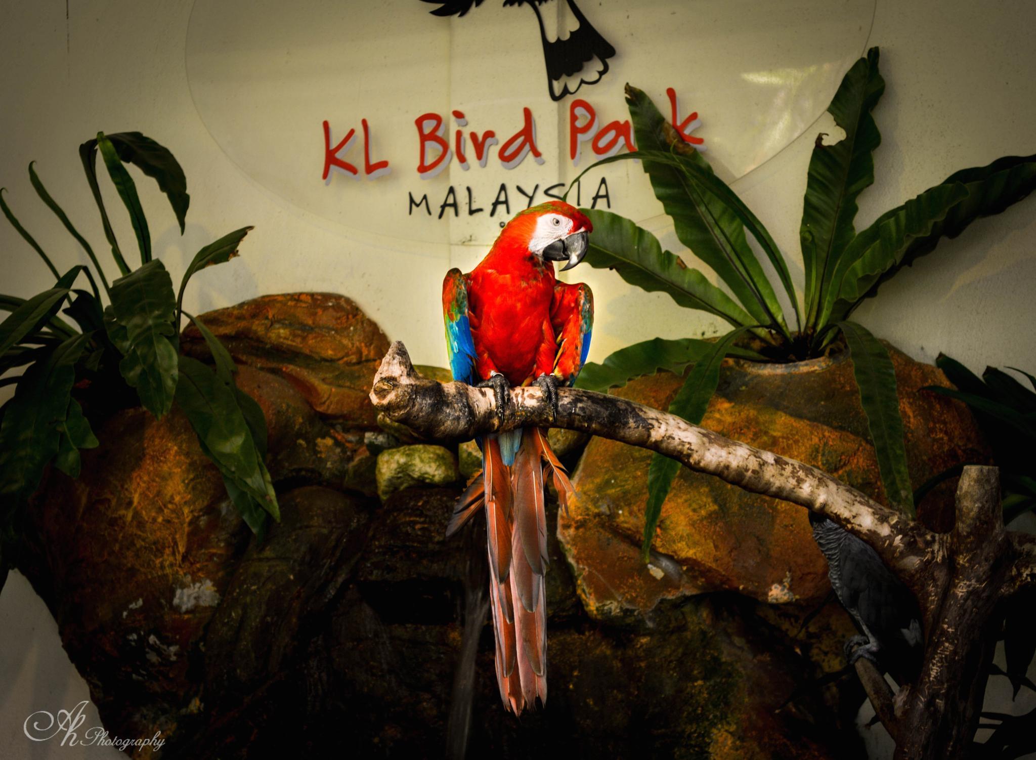 Red Rio @KL Bird Park by Anupam Hore