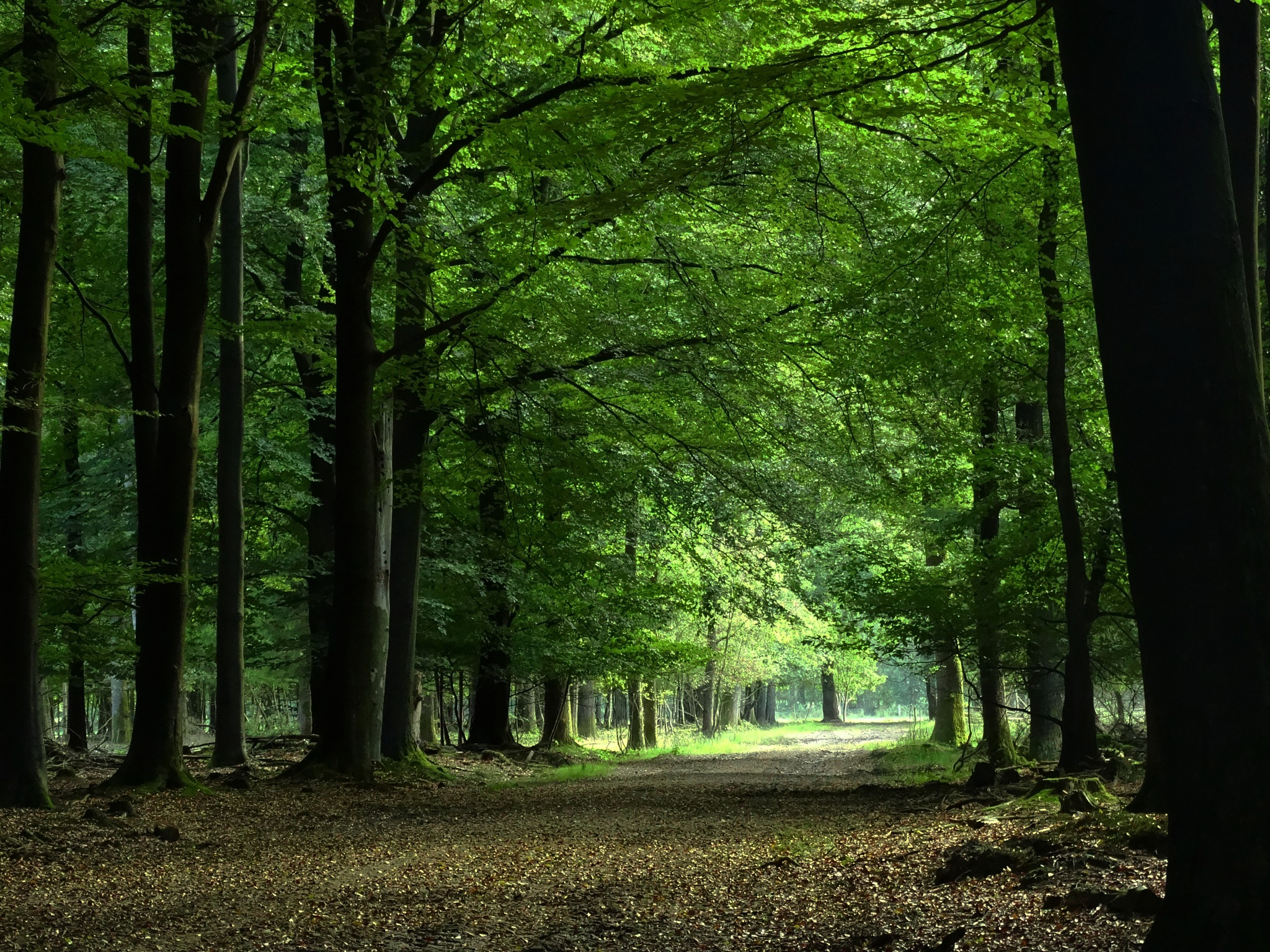 Dutch forest.  by GertdeVos