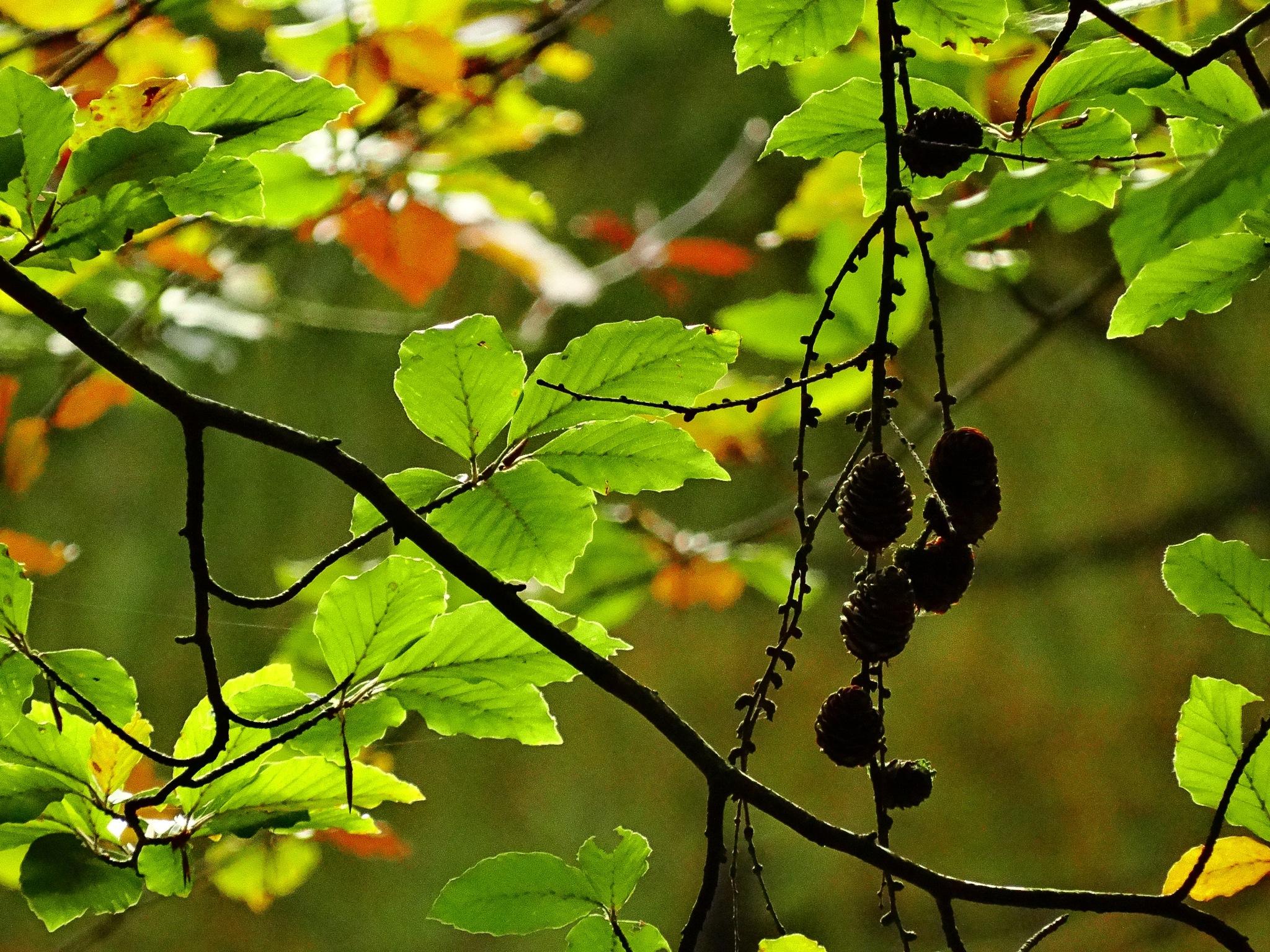 Autumn by GertdeVos
