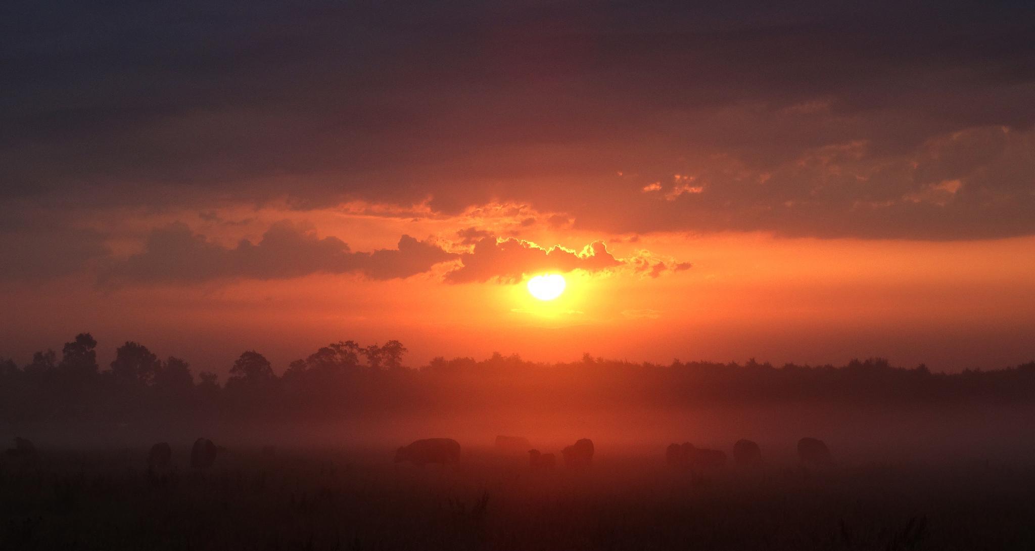 Sun fights to get through the morning fog by GertdeVos
