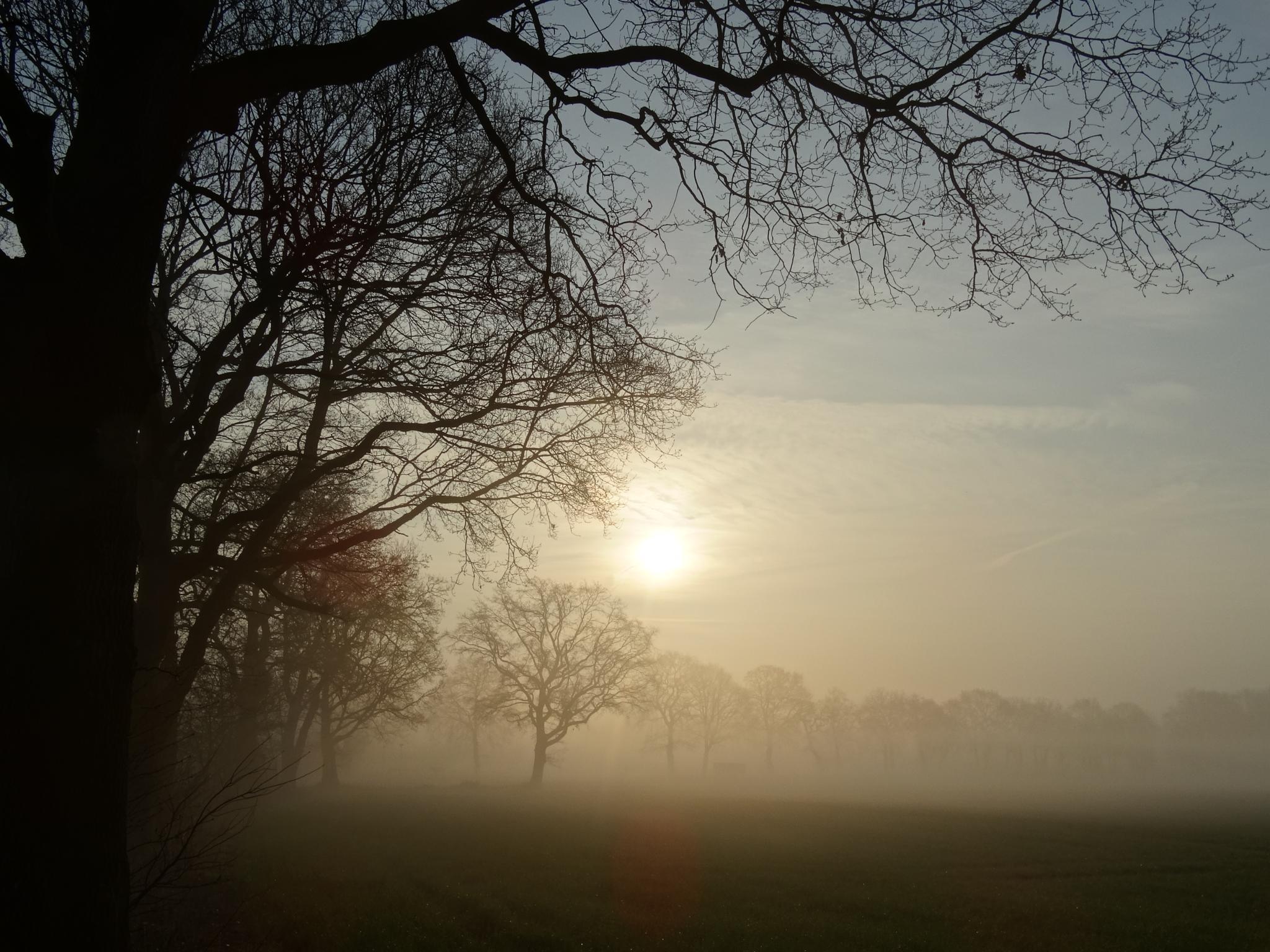 Foggy morning by GertdeVos