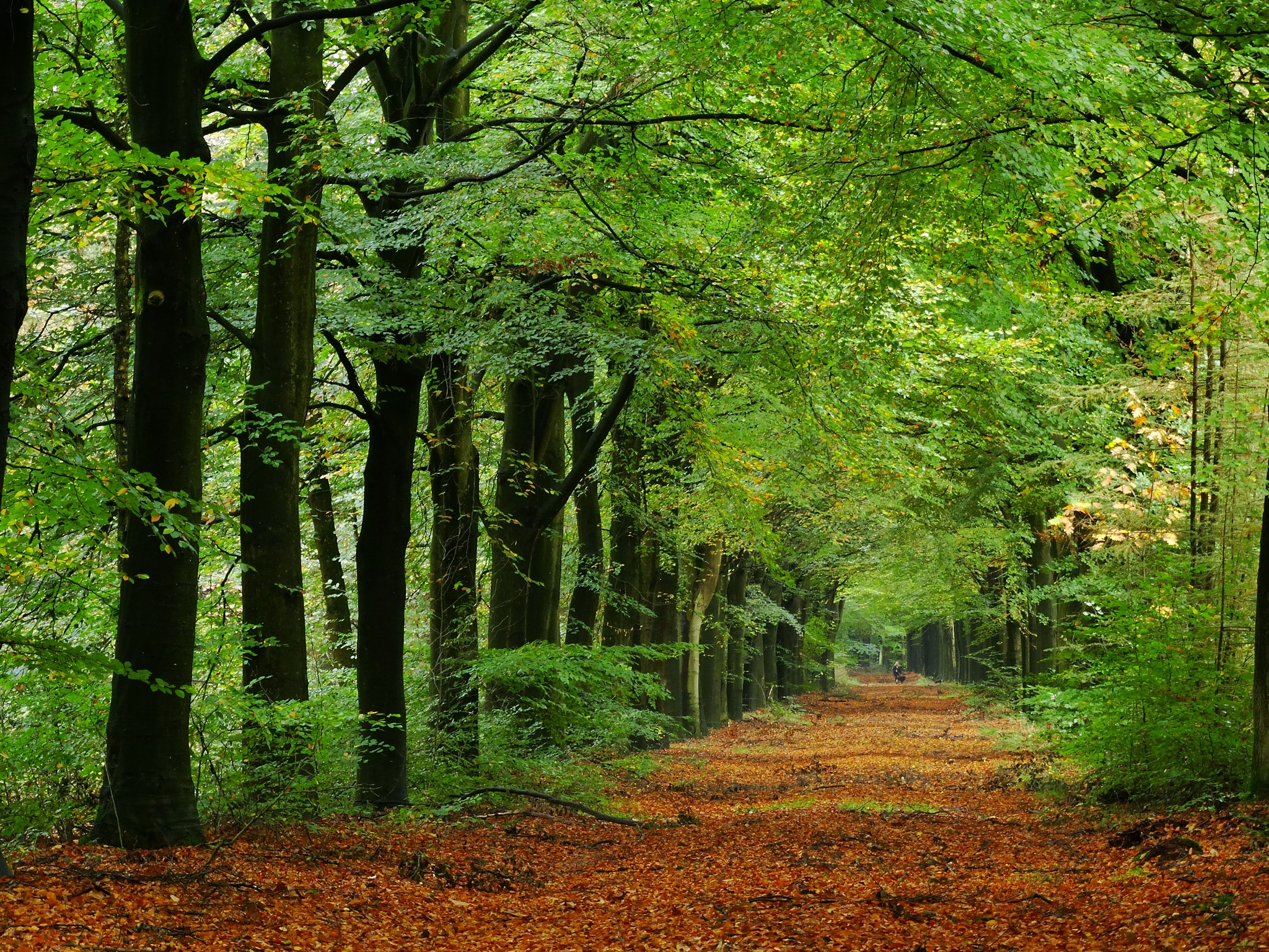 Autumn!  by GertdeVos