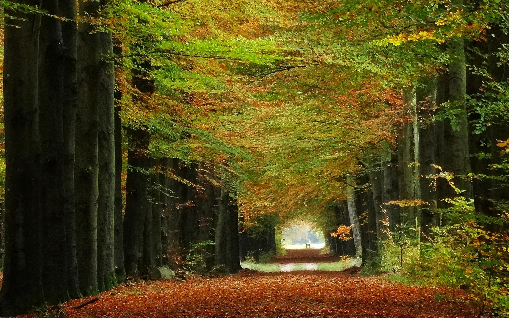 Beautiful forest! by GertdeVos
