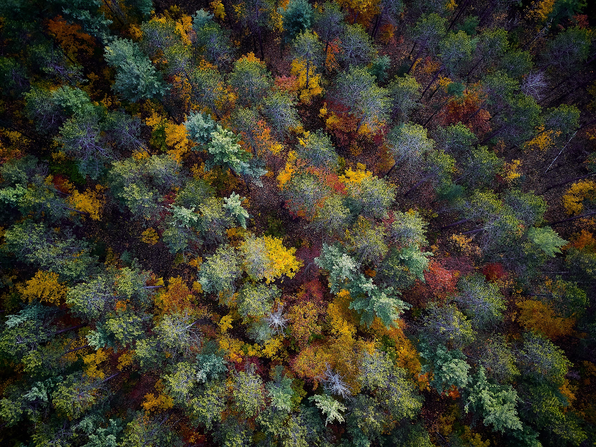 Fall Flyover by Herb Drummond
