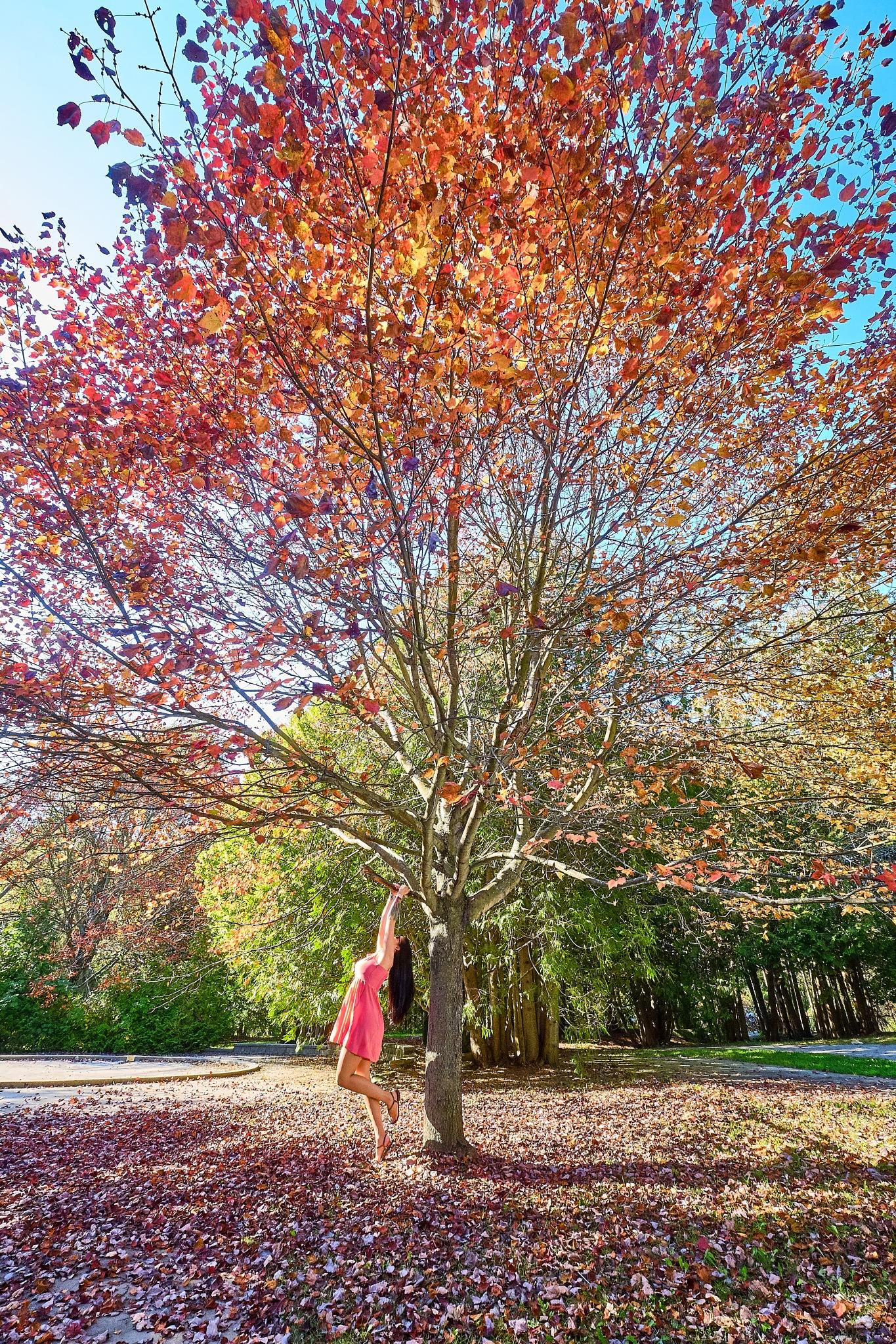Autumn! by Herb Drummond